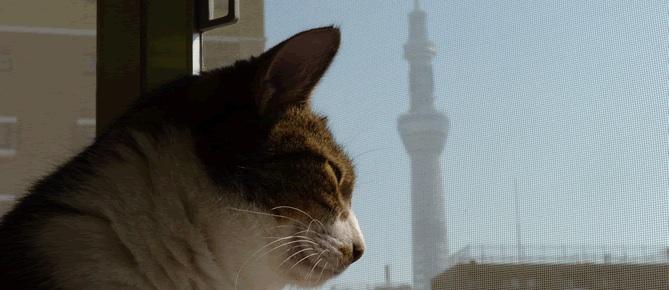 東京・浅草の猫カフェ。浅草ねこ園 Cat Cafe Asakusa Nekoen Tokyo,Japan